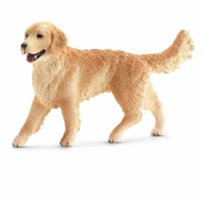 GOLDEN RETRIEVER HEMBRA